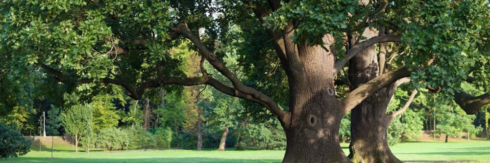 tree service mansfield ohio